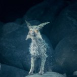 First Details On The Vulptex From The Last Jedi
