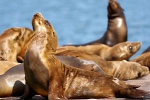 Bold Beaches 10 Oceanfront Hotels That Break The