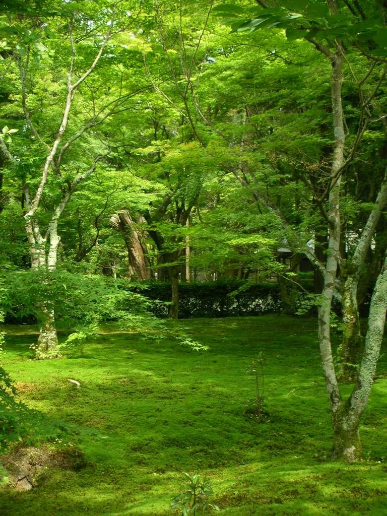 苔寺 | さくら日和~旅とヘナと著物の日々~
