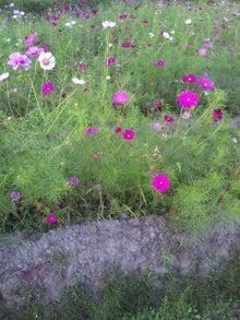 奈良のエステサロン・RbC/レヴェイユのブログ