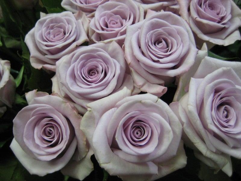 Roses Names Lavender