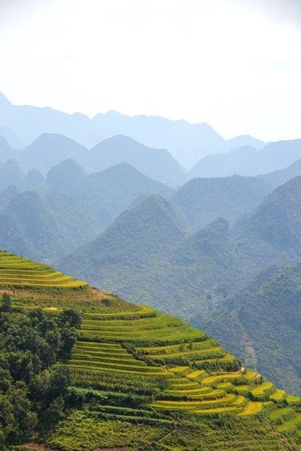 ベトナム北部、稲刈りの時期、秋のハジャン省の風景 | ほっと一息☆旅好き!フェニックススタッフのつぶやき