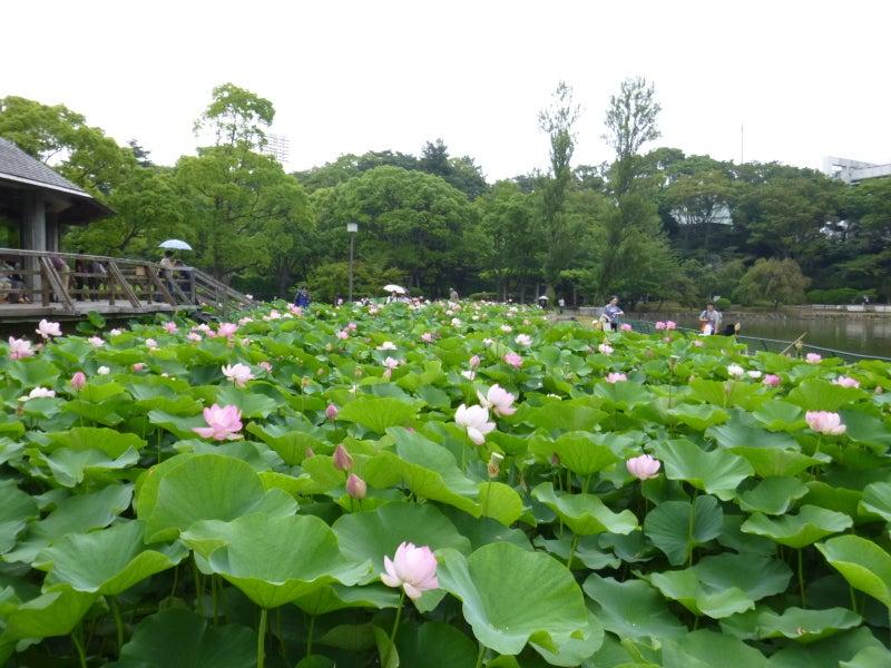 千葉公園に行ってきた   サラリーマン経理・村上の視點