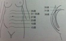 腹囲、子宮底|♡♡みーちゃんの育児奮闘ライフ♡♡