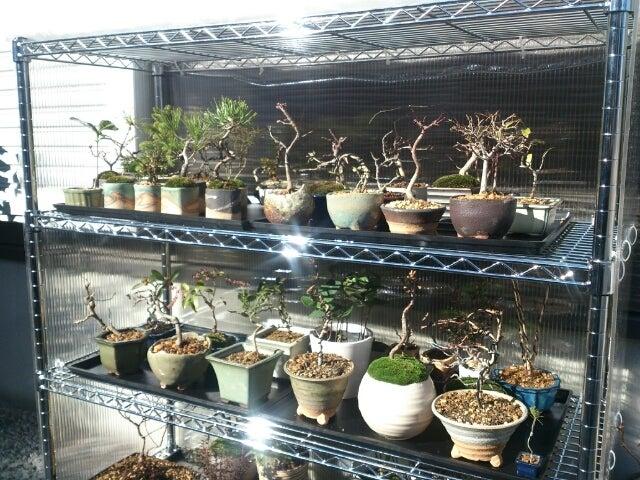 DIY盆栽棚の完成!!\\(^o^)/ | 盆栽くんの日記