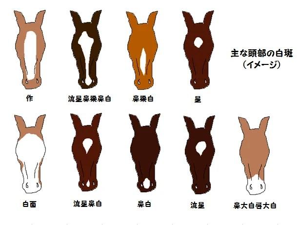 馬體の特徴と個體識別 | LIBERTE店長ブログ