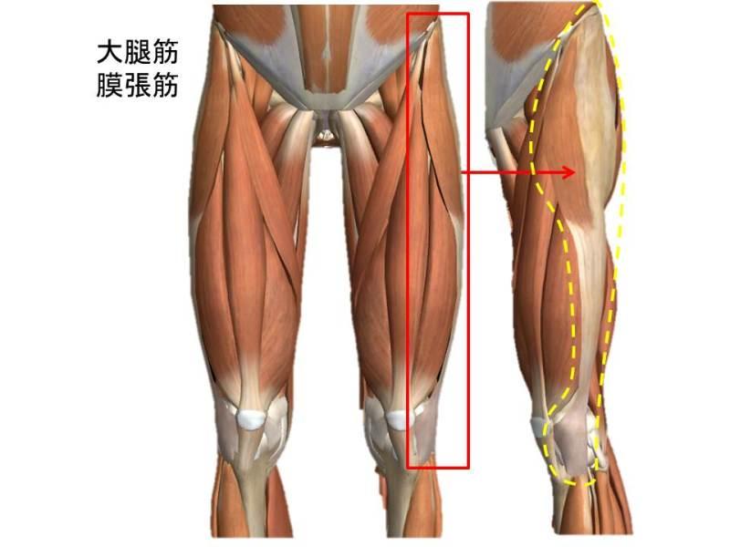 下腿/大腿筋膜張筋 | 東工大陸上部短距離ケガブログ