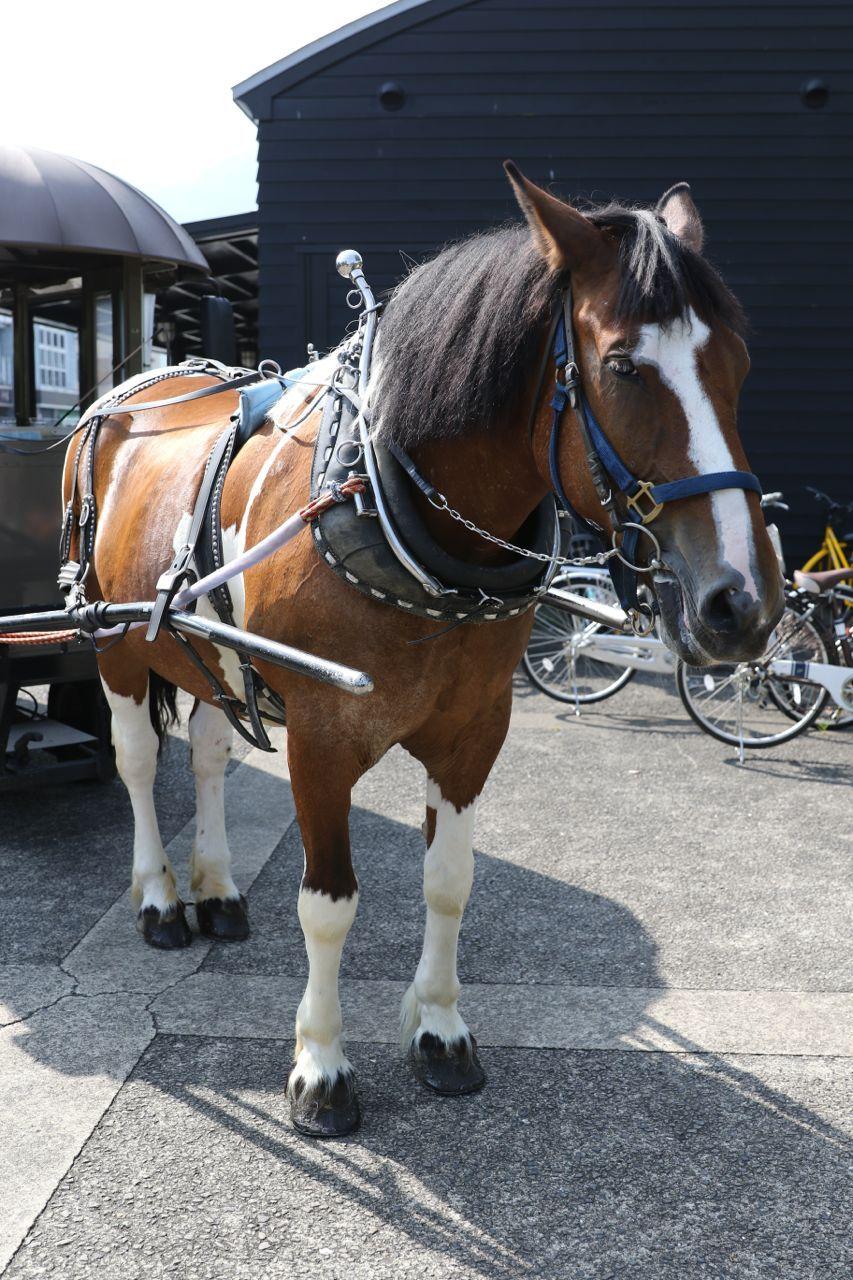 ゆふいん辻馬車に乗りました   トム子の馬ブログ
