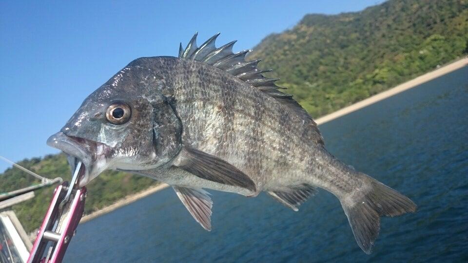 毒魚 | 輝きライフ見遊録