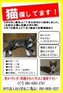 .迷子猫捜索、目撃情報