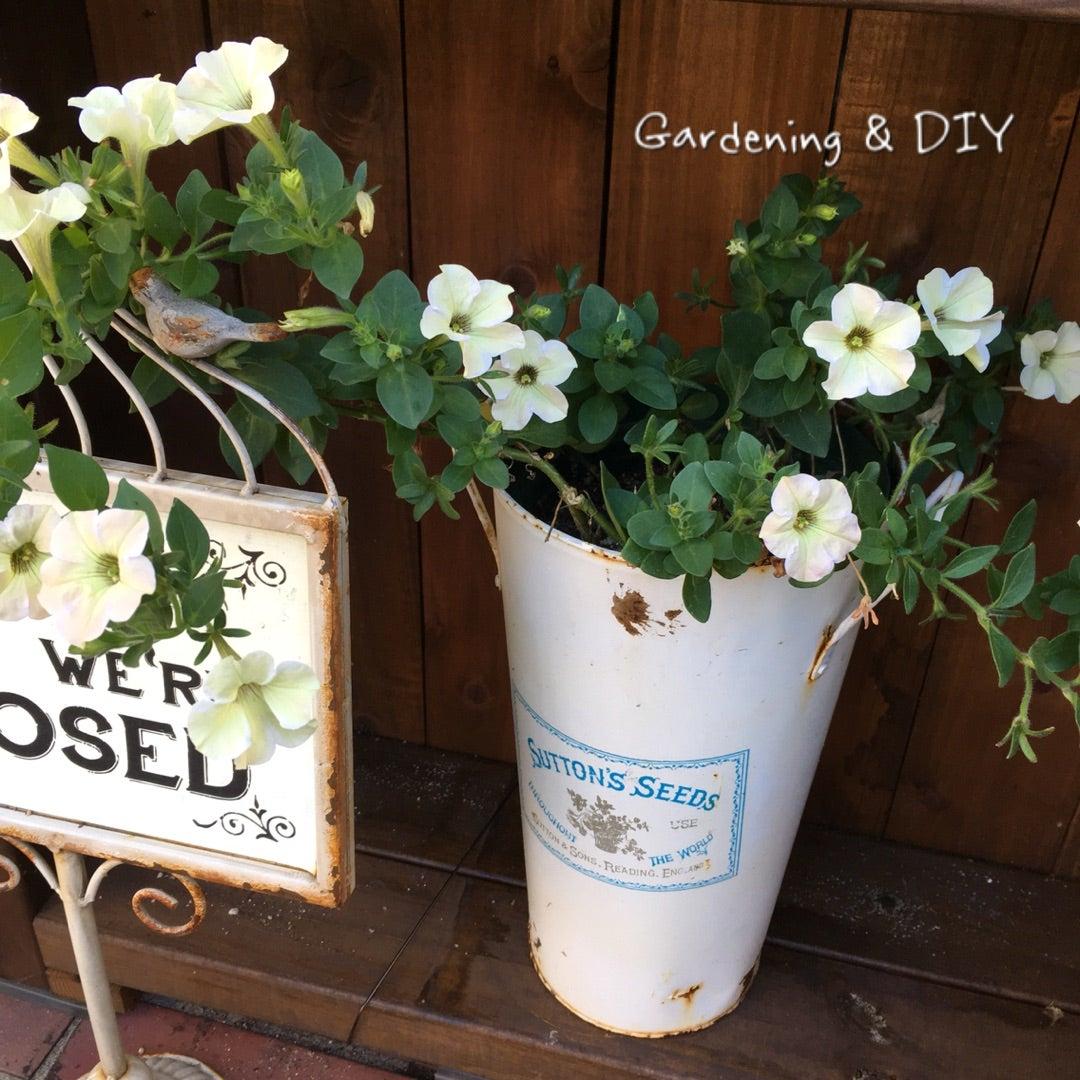 見切りっコ切り花   庭造りとDIY