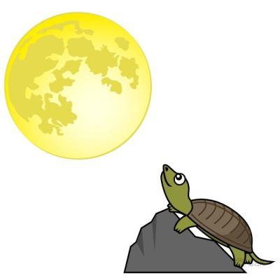 「月とスッポン」の画像検索結果