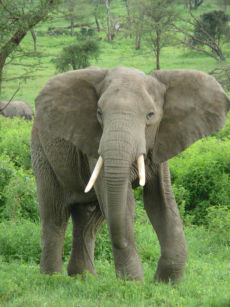 6月18日「日本に象が來た日」   95歳ブログ「紫蘭の部屋」