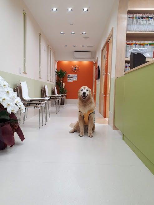 おだ動物病院グループ動物醫療センター開院☆   おだ動物醫療センター通信