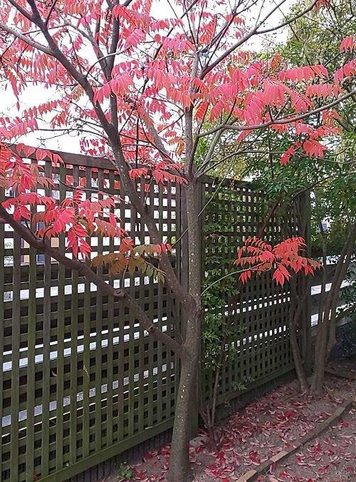 庭の落葉に追い付かない | 山口県宇部市終活相続よろず相談所