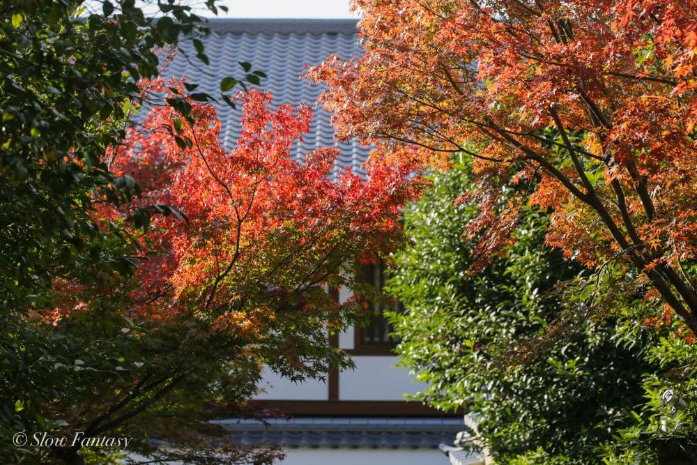 高臺寺の紅葉は見頃です。   Slow Fantasy 〜ゆるやかに〜