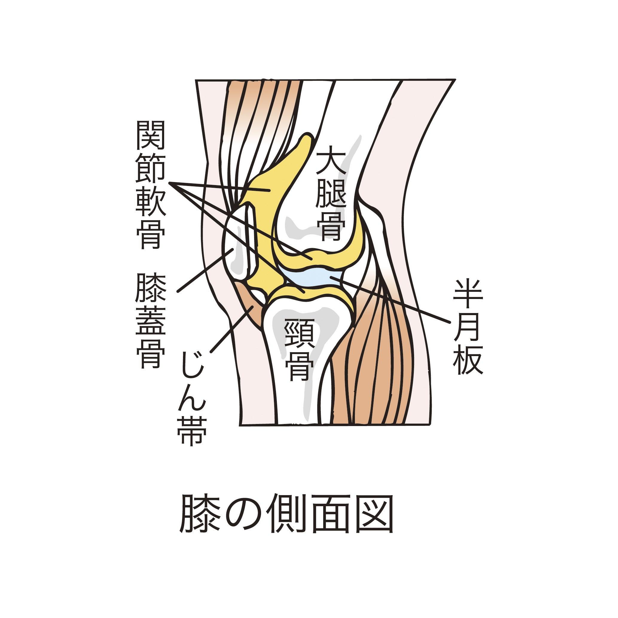 膝の痛み - かどいけ接骨院
