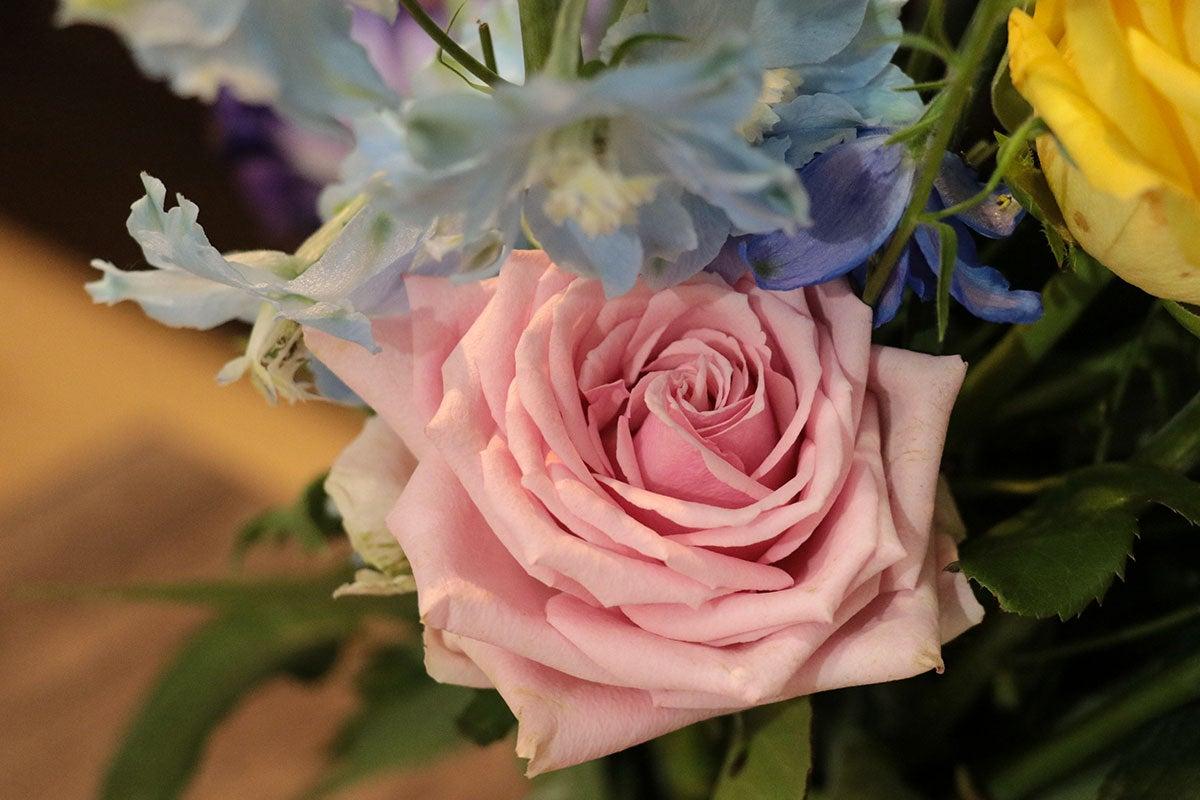 供花の花 | リフォームした家と桜の咲く庭で