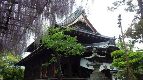歴 史 の 郷 に 咲 く 藤 | 《 千 曲 川 旅 日 記