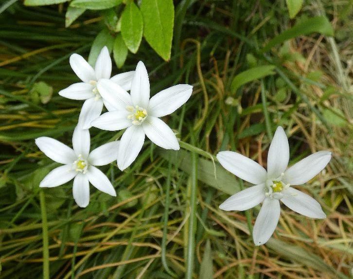 自宅庭の花、2020年5月15日、朝日の出、咲いている花、5月20日公開 | 新 二本松藩だより