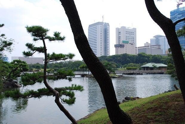 NO552 浜離宮恩賜庭園 東京都中央區   並木一の巨樹探訪
