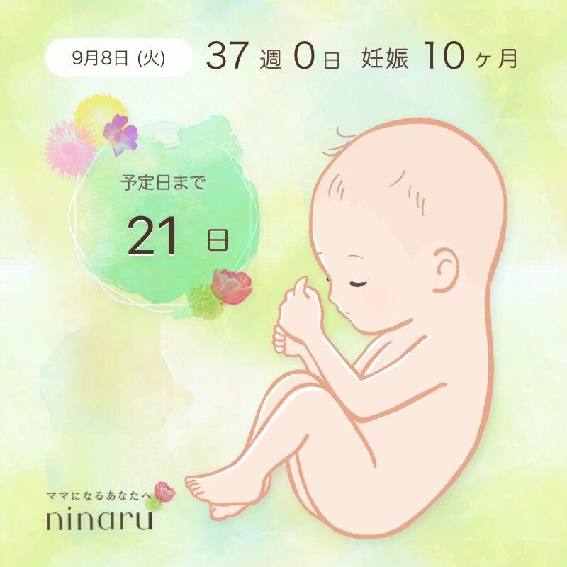 今日から37週 | 1人目妊娠9ヶ月目からのまうすのこまうすブログ