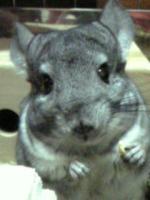 小動物大好きさんのプロフィールページ