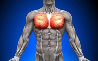 「胸筋」の画像検索結果