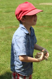 Boy holding frog on the Fourth of July