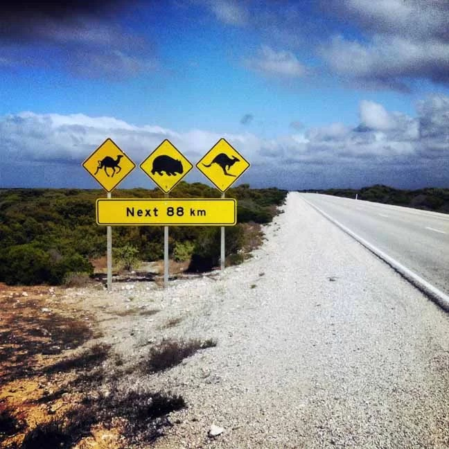 a sign warning about camels, wombats and kangaroos crossing the roads.