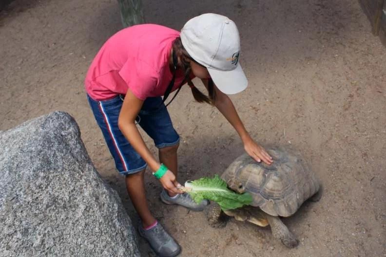 Journey feeding a tortoise