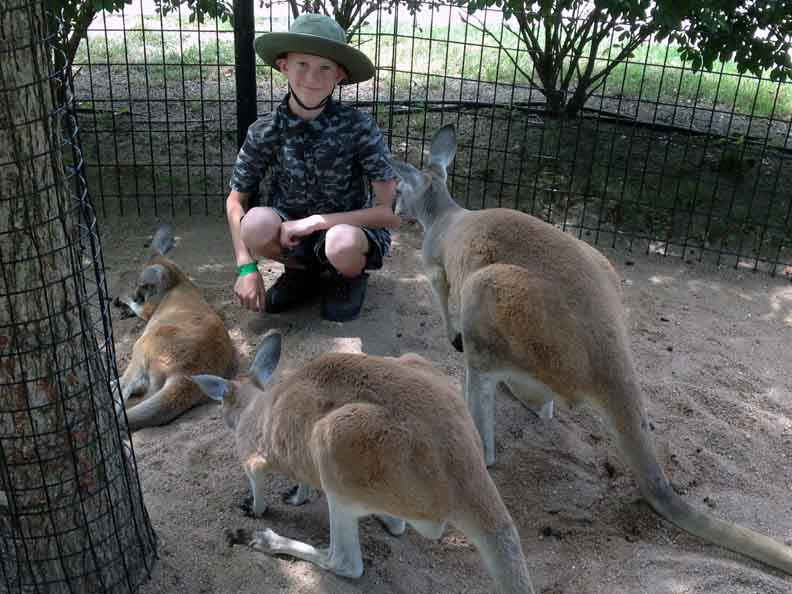 Miles-and-three-kangaroos-
