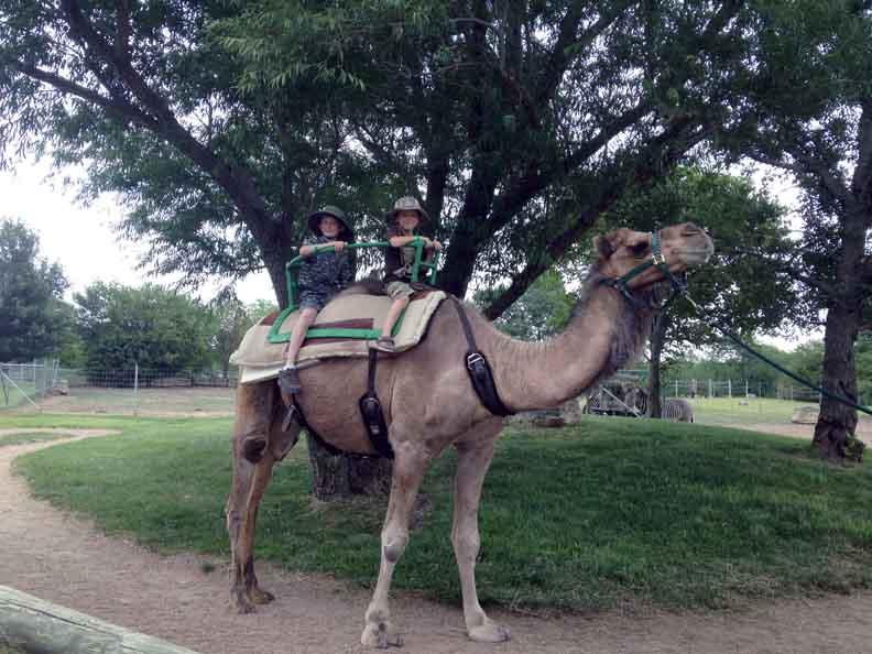 two boys riding a camel