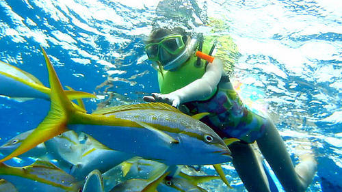 snorkeling in andaman island