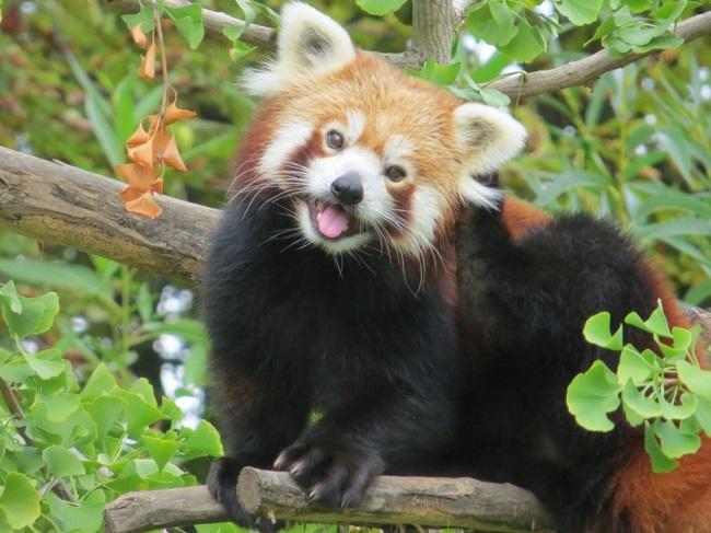 Sikkim-wildlife