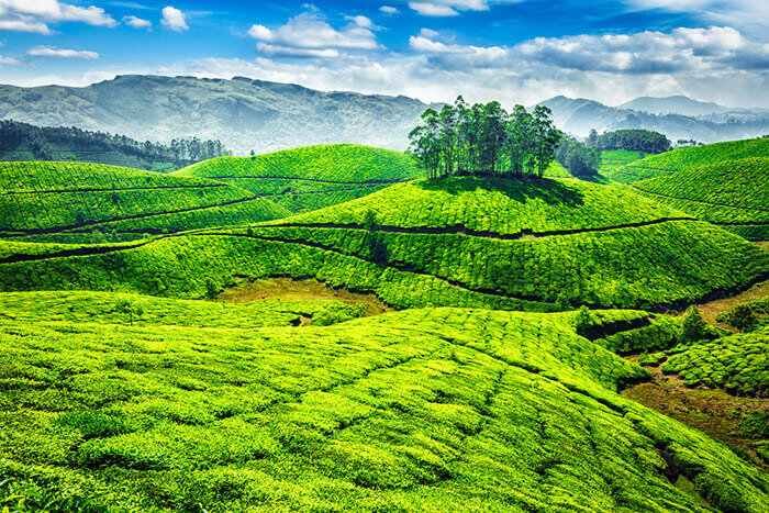Munnar - India Tour