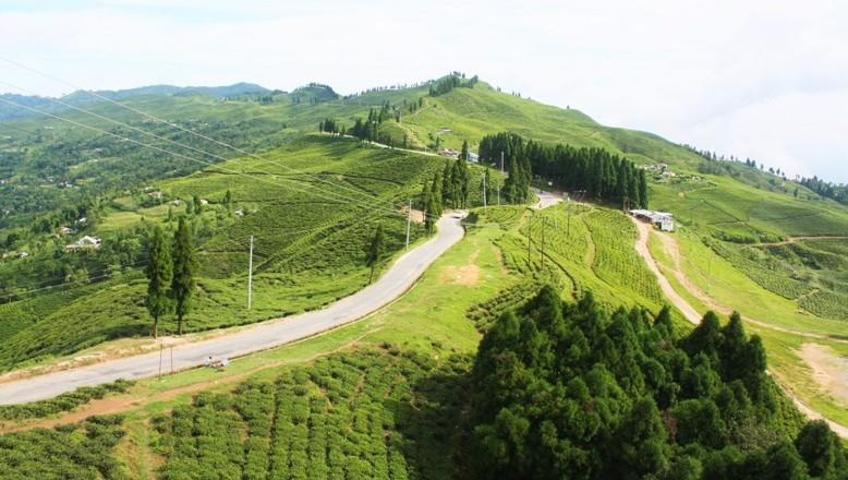 Tea Garden in Ilam Nepal