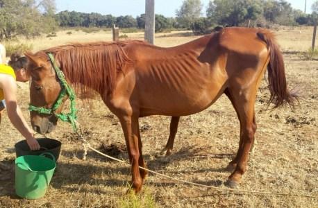 Horse neglect in Portugal