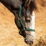 Lucky Luciano rescued foal
