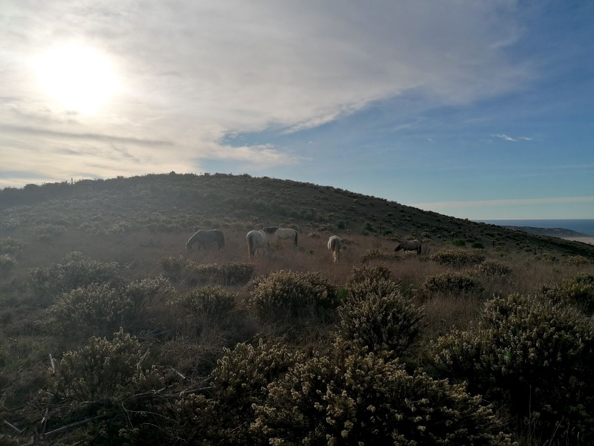 Camping on a hilltop with horses