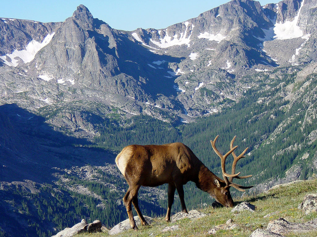 Idaho Home Animals Mountain