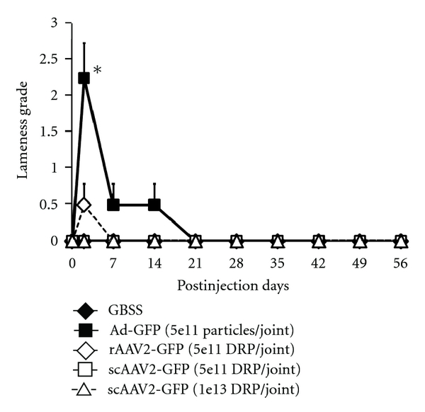Inflammation and Immune Response of Intra-Articular