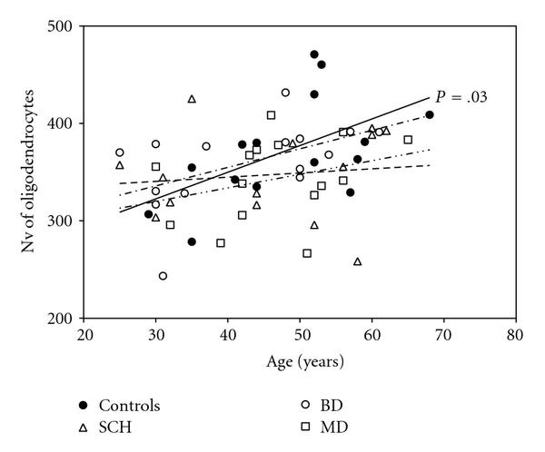 Age-Related Increase in the Number of Oligodendrocytes Is