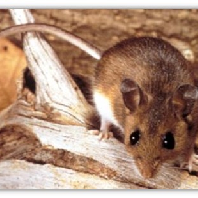 King County has first two cases of hantavirus in 14 years; one ...