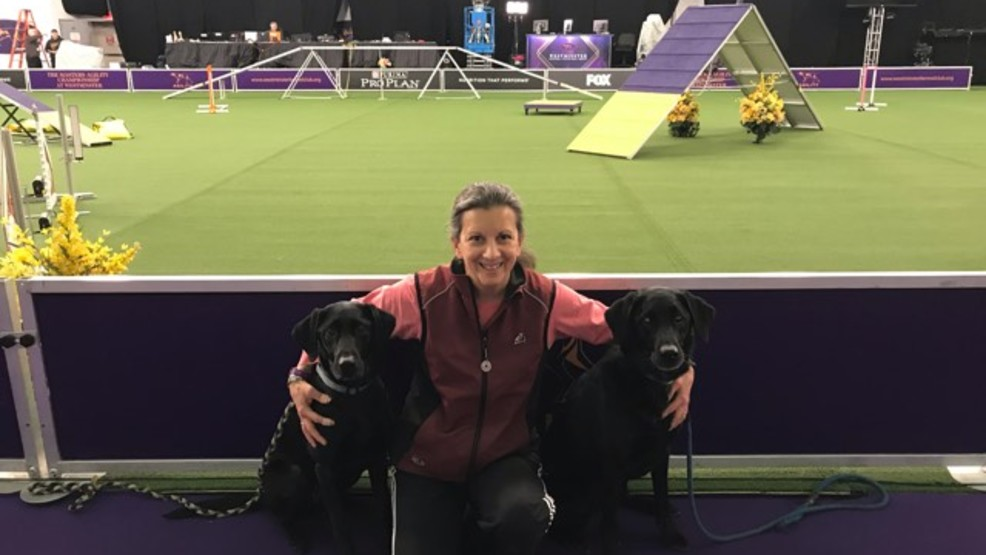 Light Syracuse-space veterinarian in agility finals at Westminster canine direct - CNYcentral.com