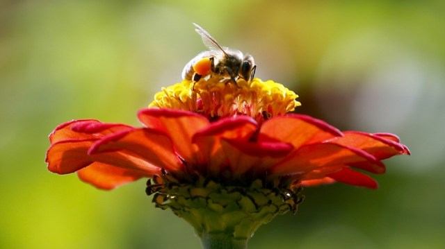 ZomBee-honeybee-zombie.jpg
