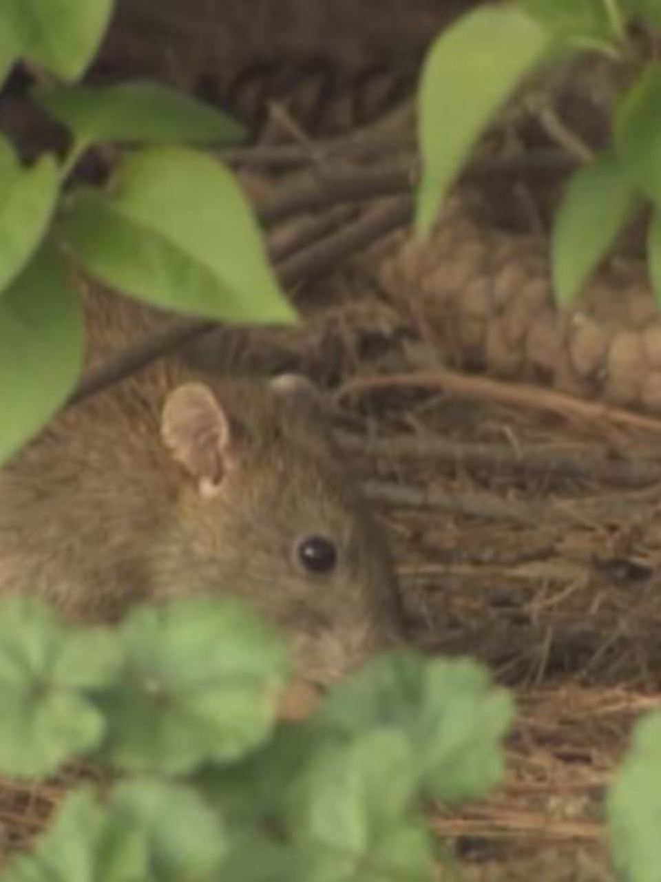 Hantavirus case confirmed in Grant County, officials urge ...