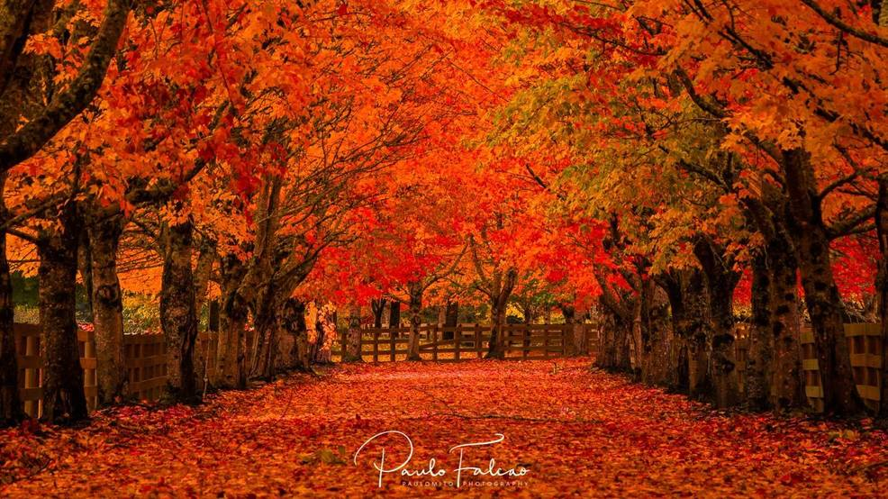 Wallpaper Images Of Fall Trees Lined Lake Why Our Autumn Weather Has Been Nearly Perfect For