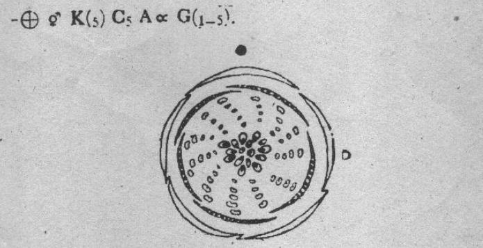 [YD_8230] Rose Flower Diagram Diagram Of Flower Parts