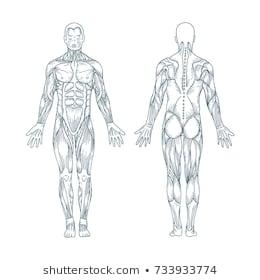 [OK_7795] Full Body Diagram Medical Chart Free Diagram